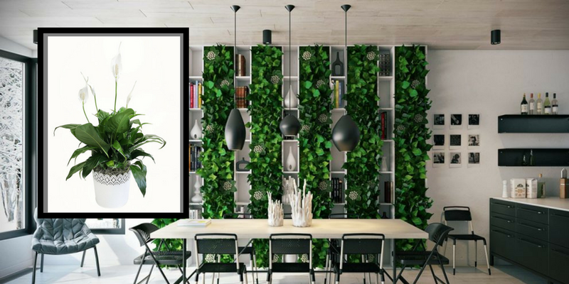 Air Cleaning Plants That Will Make Your Dining Room Cry For More 1