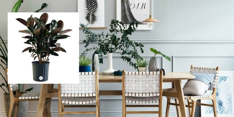 Air Cleaning Plants That Will Make Your Dining Room Cry For More 6