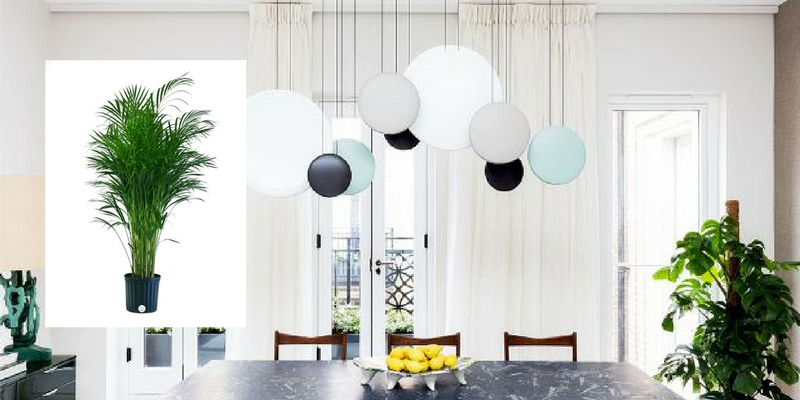 Air Cleaning Plants That Will Make Your Dining Room Cry For More 7
