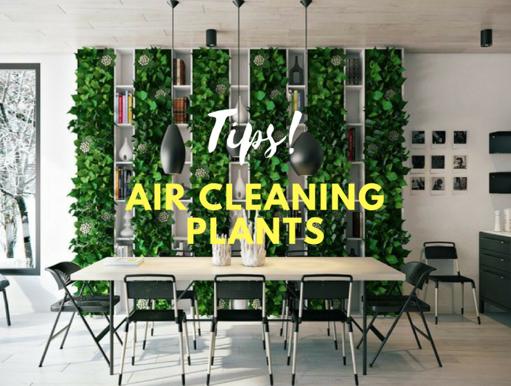 Air Cleaning Plants That Will Make Your Dining Room Cry For More